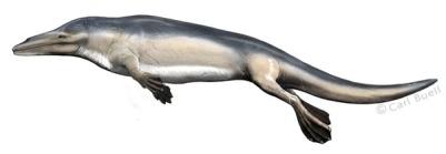 Rodhocetus con una piel similar a la de los hipopótamos por Carl Buell.